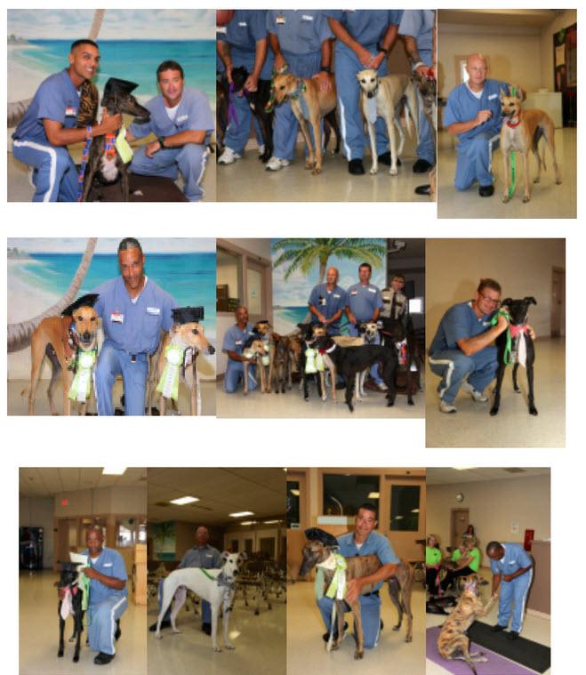 Prison Trained Greyhounds | Bay Area Greyhound Adoption